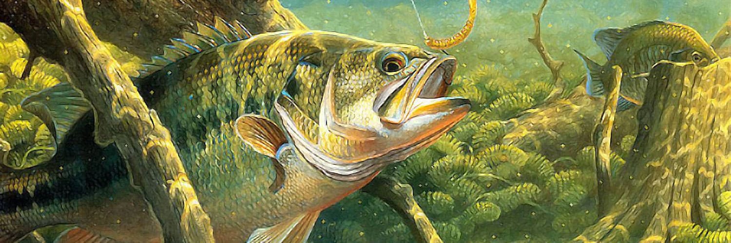 The Ultimate Beginners Guide To Bass Fishing