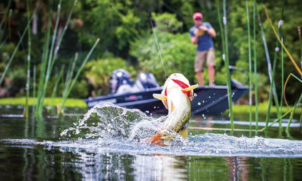 The ultimate beginners guide to bass fishing best tips for Bass fishing pictures